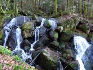 Wandern entlang der Gertelbach-Wasserfälle und auf dem Luchspfad @ Wanderparkplatz Gertelbach, Bühlertal | Bühlertal | Baden-Württemberg | Deutschland